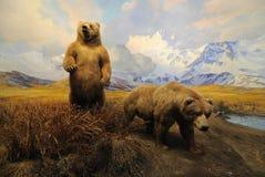 Ursos do Alasca imagens de stock