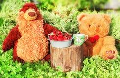 Ursos do brinquedo no piquenique Fotos de Stock
