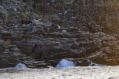 Ursos polares em uma ilha remota no ártico Fotografia de Stock