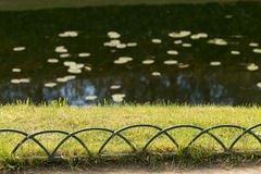 Ursprüngliche Hecke von Niederlassungen um den Teich lizenzfreie stockfotos