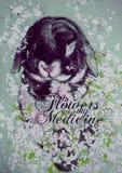 Ursprüngliche Kunst das schwarze Kaninchen liegt auf seiner zurück gestreut mit weißen Blumen mit den Aufschrift Blumen sind mein lizenzfreie abbildung