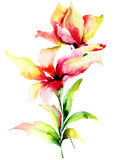 Ursprüngliche Lilienblumen Stockbild