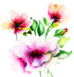Ursprüngliche Sommerblumen Stockfotos