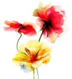 Ursprüngliche Sommerblumen Stockbild