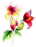 Ursprüngliche Sommerblumen Stockbilder