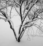 Ursprüngliche Winterschneeszene von bloßen Baumasten Stockfotos