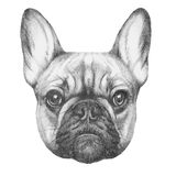 Ursprüngliche Zeichnung der französischen Bulldogge lizenzfreies stockbild