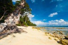 Ursprünglicher unentwickelter Sand-Strand-Waldniedrige Gezeiten Lizenzfreies Stockfoto
