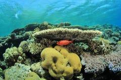 Ursprüngliches Korallenriff Lizenzfreies Stockbild