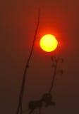 Ursprunget av solförmörkelsen Royaltyfri Bild