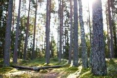 Ursprunglig skog i höst Arkivfoto