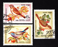 URSS - CERCA DE 1981: uma série dos selos impressos em URSS, pássaros da música das mostras, CERCA de 1981 Fotos de Stock