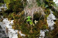 Urtica en mos op een steen stock afbeeldingen