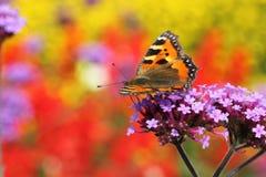 Urticaria de la mariposa en el perfil que se sienta en la flor fotografía de archivo libre de regalías