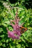 Urticaria de la mariposa en la flor Foto de archivo libre de regalías