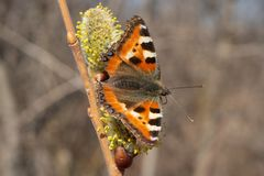 Urticaria de papillon photos libres de droits