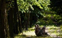 Urtids- skog Royaltyfria Foton