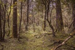 Urtids- skog royaltyfri foto