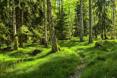 urtids- skog Royaltyfria Bilder