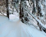 Urtids- skog för vinterberg Royaltyfria Foton