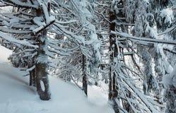 Urtids- skog för vinterberg Arkivfoto