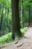 Urtids- skog i södra västra Polen Arkivbild