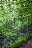 Urtids- skog i södra västra Polen Fotografering för Bildbyråer