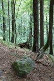 Urtids- skog i södra västra Polen Royaltyfri Bild