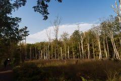 Urtids- skog på Darss Royaltyfria Bilder