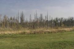 Urtids- skog på Darss Royaltyfri Foto