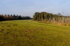 Urtids- skog på Darss Arkivbilder