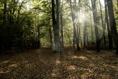 Urtids- skog på Darss Arkivfoto