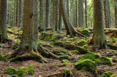 Urtids- skog Zadna Polana Fotografering för Bildbyråer
