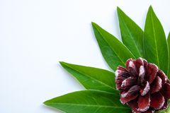 Urto e foglie verdi su un fondo bianco fotografia stock libera da diritti