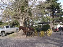 Uruguay - Colonia - Carriage. Uruguay, Colonia - Latinamerica - Horse Carriage royalty free stock image