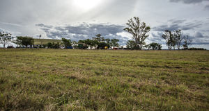 Uruguay fields. Uruguay grass fields, some cow production Stock Images