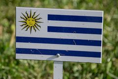 Uruguay flag isolated on green grass Stock Photography