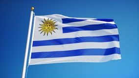 Uruguay flag in slow motion seamlessly looped with alpha. Uruguay flag waving in slow motion against clean blue sky, seamlessly looped, close up, isolated on stock footage
