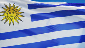 Uruguay flag in slow motion seamlessly looped with alpha. Uruguay flag waving in slow motion against clean blue sky, seamlessly looped, close up, isolated on stock video footage