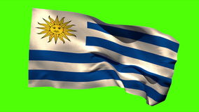 Uruguay national flag blowing in the breeze. On green screen background stock video
