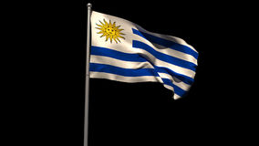 Uruguay national flag waving on flagpole. On black background stock video