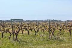 Uruguayan fields. Southeast Zone Uruguayan wine, near the Rio Uruguay. Carmelo. Uruguay Royalty Free Stock Photo