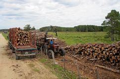 Uruguayan harvesters moving and transporting logs with an old truck. royalty free stock photo