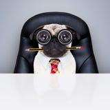 Urzędnika szefa pies Fotografia Royalty Free