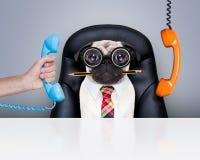 Urzędnika szefa pies Obrazy Stock