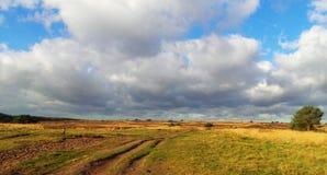 A urze coloca os Países Baixos Fotografia de Stock Royalty Free