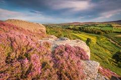 Urze e penhascos dos terraços de Rothbury Fotografia de Stock Royalty Free