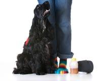 Usługowy pies zdjęcia stock