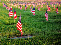 US American Flags Honoring Veterans Cemetery Grave Royalty Free Stock Photography