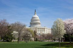 US Capitol Building. The US Capitol Building on a bright spring day in Washington DC with the cherry trees in bloom Stock Photo